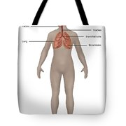 Respiratory System In Female Anatomy Tote Bag