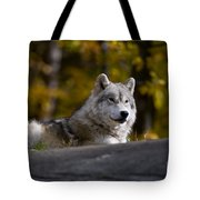 Resting Arctic Wolf On Rocks Tote Bag