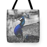 Resting Peacock Tote Bag