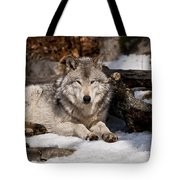 Resting Timber Wolf Tote Bag