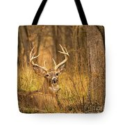 Resting White-tailed Deer Buck Tote Bag