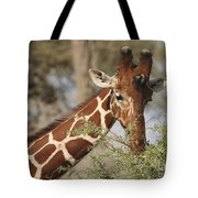Reticulated Giraffe Feeding On Acacia Tote Bag