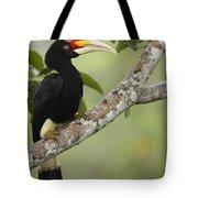 Rhinoceros Hornbill Female Sepilok Tote Bag