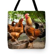 Rhode Island Red Chickens And Wooden Feeder  Tote Bag