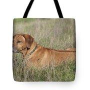 Rhodesian Ridgeback Dog Tote Bag