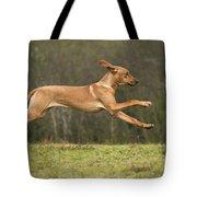 Rhodesian Ridgeback Tote Bag