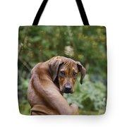 Rhodesian Ridgeback Puppy Tote Bag