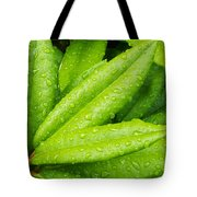 Rhododendron Leaves Tote Bag
