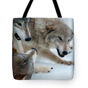 Right Of Passage Tote Bag by Sandra Bronstein