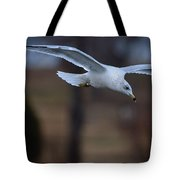 Ring-billed Gull Gliding Portraits 2 Tote Bag