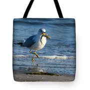 Ring-billed Gull With Its Catch Tote Bag