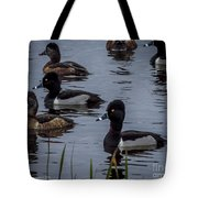Ring-necked Ducks 6 Tote Bag