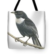 Ring Ouzel  Tote Bag by Anonymous