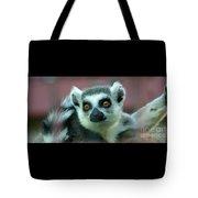 Ring Tailed Lemur-2 Tote Bag