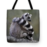 Ring-tailed Lemur Lemur Catta  Tote Bag