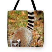 Ring-tailed Lemur Lemur Catta Walking Tote Bag