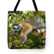 ring-tailed lemur Madagascar 1 Tote Bag