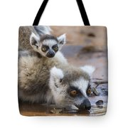Ring-tailed Lemur Mother Drinking Tote Bag