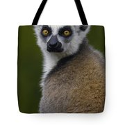 Ring-tailed Lemur Portrait Madagascar Tote Bag