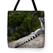 Ring-tailed Lemur Resting Madagascar Tote Bag
