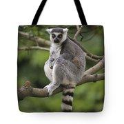 Ring-tailed Lemur Sitting Madagascar Tote Bag
