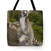 Ring-tailed Lemur Standing Madagascar Tote Bag