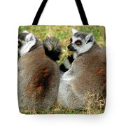 Ring-tailed Lemurs Lemur Catta Tote Bag