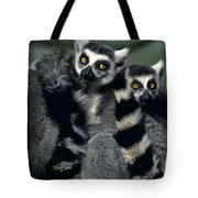 Ringtailed Lemurs Portrait Endangered Wildlife Tote Bag