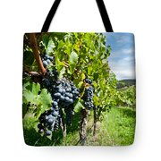 Ripe Grapes Right Before Harvest In The Summer Sun Tote Bag