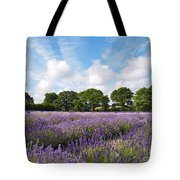 Ripening English Lavender In Hampshire Tote Bag