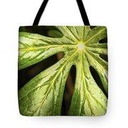 Rising Star The Mayapple Of Spring Tote Bag