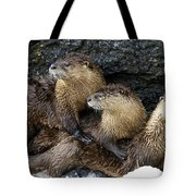 River Otter Trio   #0922 Tote Bag