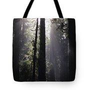 Road Through Redwoods Tote Bag