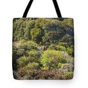 Roadside Forest Scenery Tote Bag