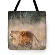 Roar Of The Kalahari Tote Bag