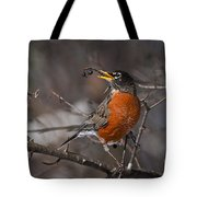 Robin Pictures 100 Tote Bag
