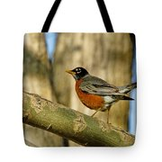 Robin Red-breast  Tote Bag