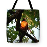 Robin Waiting Tote Bag