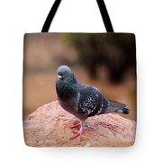 Rock Pigeon 030515 A Tote Bag