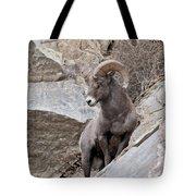 Rocky Mountain Big Horn Sheep Ram Tote Bag