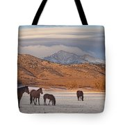 Rocky Mountain Country Morning Tote Bag