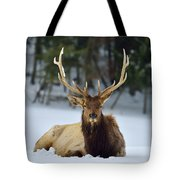 Rocky Mountain Elk Tote Bag