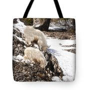 Rocky Mountain Goats - Mother And Baby Tote Bag