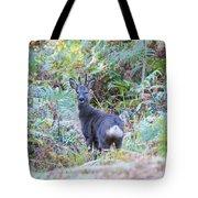 Roe Buck In Woodland Tote Bag