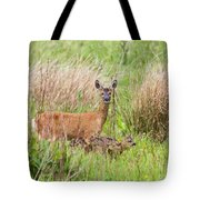 Roe Deer Capreolus Capreolus With Two Fawns Tote Bag