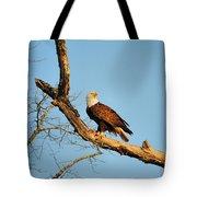 Roosting Tree 1 Tote Bag