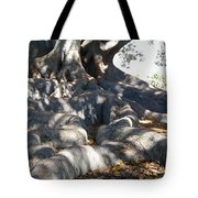 Roots Of Large Fig Tree Tote Bag