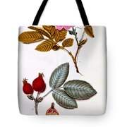 Rosa Villosa Tote Bag by German School
