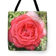 Rose At Clark Gardens Tote Bag