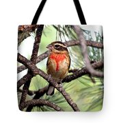 Rose-breasted Grosbeak On Pine Tree Tote Bag